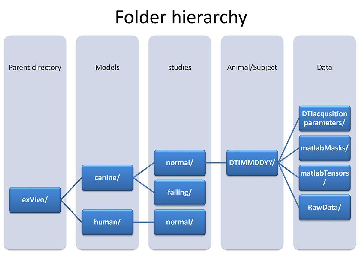 dti folder hierarchy